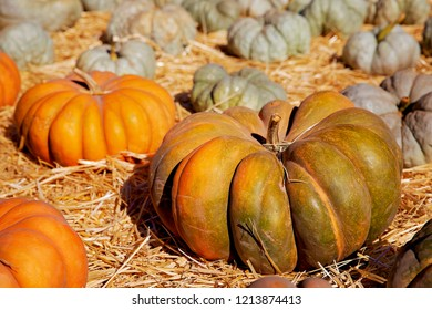 Pumpkins on a field.