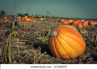 Pumpkins on a field under a great cloudscape. Toned picture with a shallow DOF.