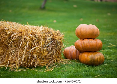 Pumpkins on the green grass. Autumn backgrounds