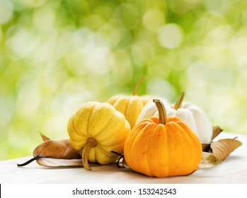 Pumpkins on green natural background.