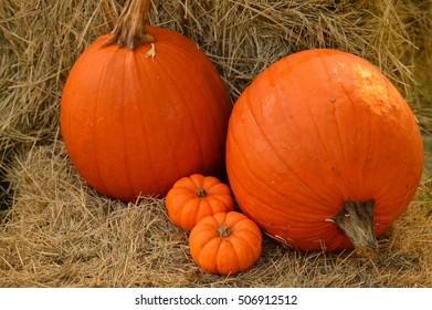 pumpkins on hay bale
