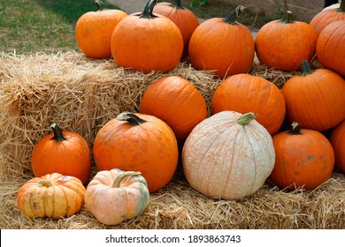 pumpkins on haystack Foxborough MA USA