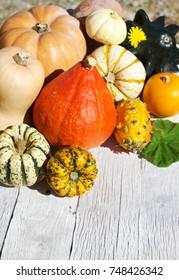 Pumpkins on old wood background