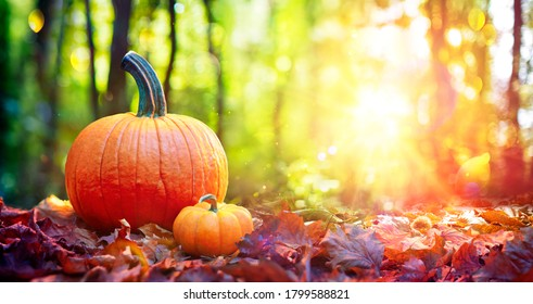 Pumpkins On Red Leaves In Autumn Forest With Defocused Sunset Background