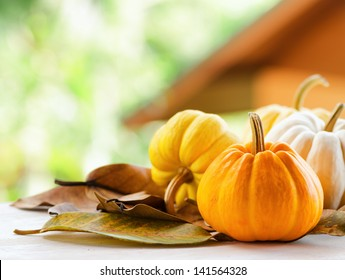 Pumpkins on rural landscape background.
