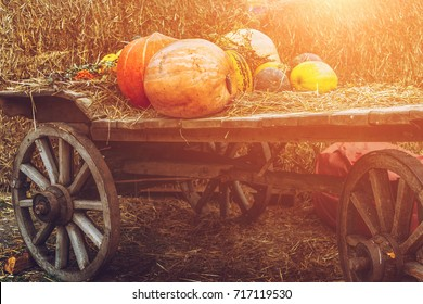 A lot of pumpkins on rustic wooden cart on a hay background,  solar filter, harvesting concept