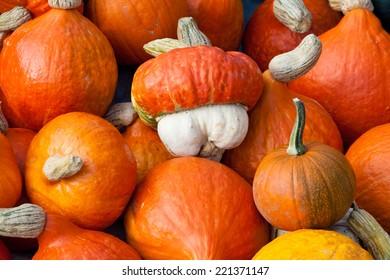Pumpkins on the seasonal market in Latvia