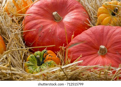 Pumpkins on straw.