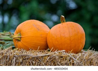 Pumpkins on straw after harvest