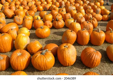 Pumpkins on a sunny day