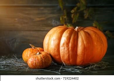Pumpkins on a wooden table. Autumn still-life. Halloween.