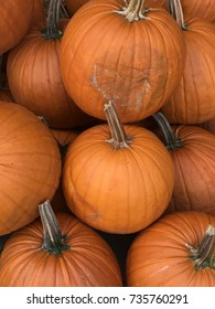Pumpkins in a patch grouped together with lots of orange color