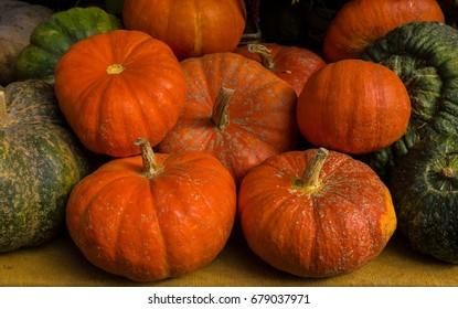 Pumpkins In the Pumpkin Farm