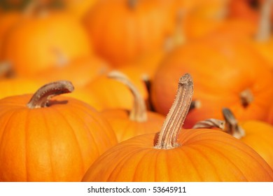 Pumpkins in a pumpkin patch