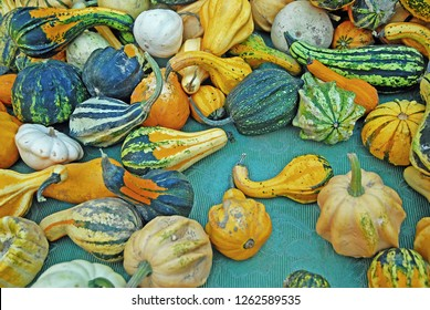 Pumpkins at Ravenna Gardens & Terraces 2015 floral exhibition.