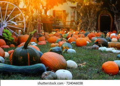 Pumpkins for sale. American farm and barns at autumn in Illinois. Halloween and autumn background.