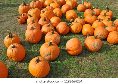 Pumpkins for Sale at an Orchard Farm in upstate New York