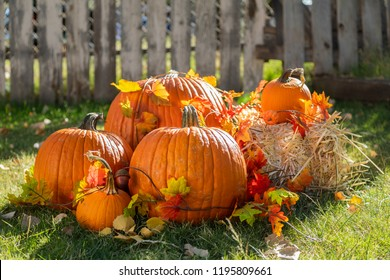 Pumpkins sitting in the grass with some hay ready for Halloween