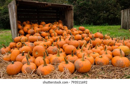 Pumpkins spilling from crate
