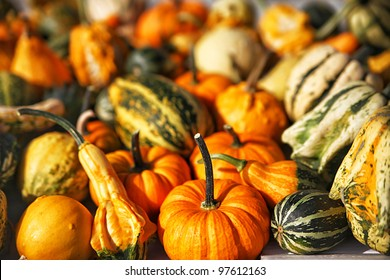 Pumpkins and Squash at Farmers Market for Sale in Autumn Fall Season
