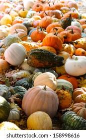 Pumpkins, Squash  & Gourd