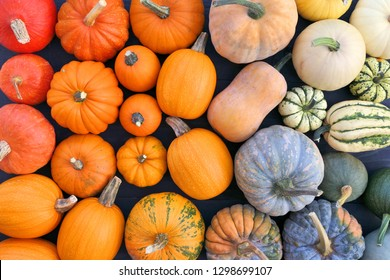 Pumpkins and squashes different varieties.