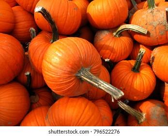 pumpkins taken from a field