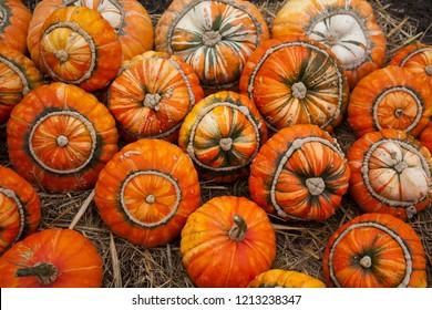 Pumpkins - Turks Turban or French Turban Squashes - Autumn Background