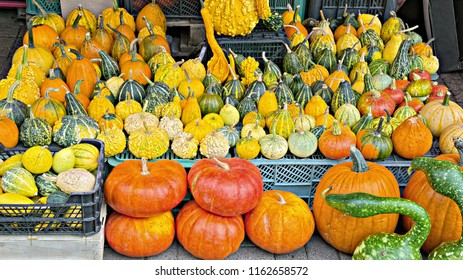 Lot of pumpkins of various sizes, shapes and colors, stacked as a showcase of a seasonal market.