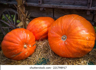 Pumpkins waiting to be sold at a pumpkin patch.