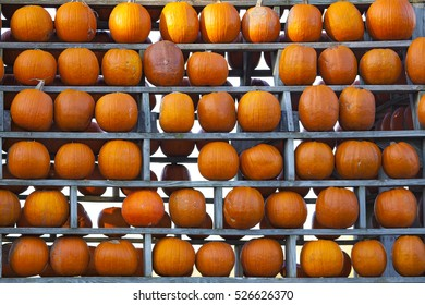 Pumpkins Wall