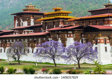 Punakha, Bhutan - April 25, 2018. Bhutanese enjoying peaceful moment under the Jacaranda blossoms along the compound of the majestic Punakha Dzong.