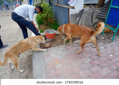 Pune, India - May 31 2020: Masked security guard feeds milk to stray dogs at  Pune, India.
