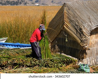 PUNO, PERU - JULY 17:  Indigenous man working on the traditional village of the floating Uros Islands on lake Tititaca, on July 17, 2015 in Puno, Peru.