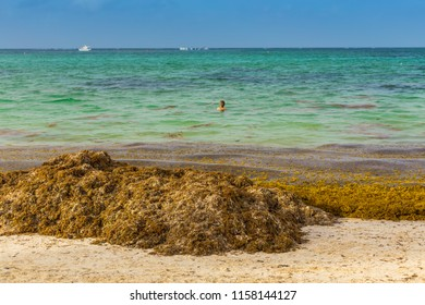 Punta Cana, Dominican Republic -  12.06.18: Seaweed invasion in Caribbean Beaches
