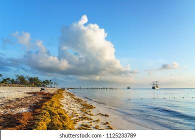 Punta Cana, Dominican Republic - June 19, 2018: : sargassum seaweeds on ocean beach in Bavaro, Punta Cana. Due to global warming, the altered ocean current bring sargasso to Dominican Republic coast.