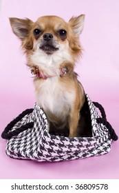 pup in bag
