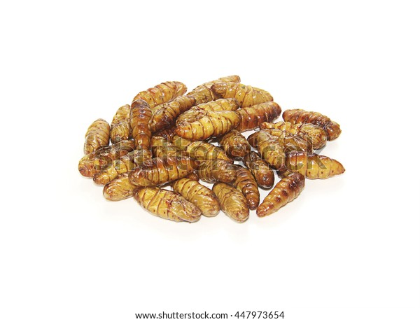 pupa isolated photography on a white background