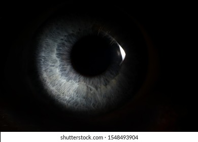 Pupil of a person peeps out of dark background. Look of criminal concept.