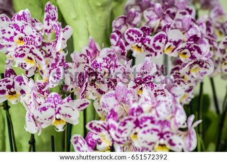 Puple white dragon flowers stock photo edit now 651572392 puple and white dragon flowers mightylinksfo