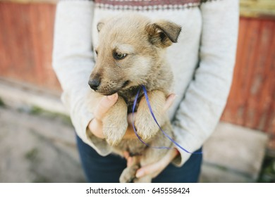 Puppies German shepherd. Beautiful puppy. Young dog. Puppy breed. The domestic dog. Street puppy, a homeless puppy