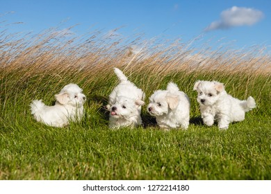 puppies in the grass