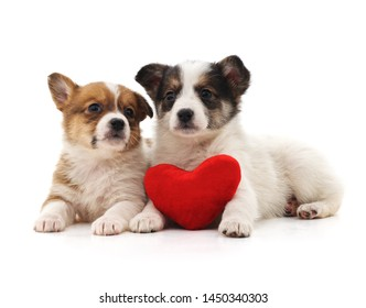 Puppies and heart isolated on a white background.