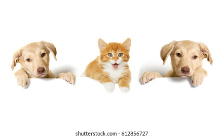 puppies And a kitten and box
