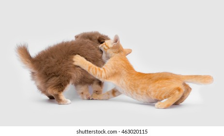Puppies Kittens Playing Together Isolated On Stock Photo Edit Now