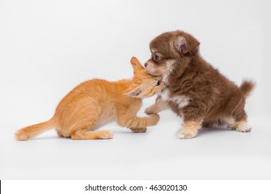 Puppies And Kittens Playing Together Isolated On White Background