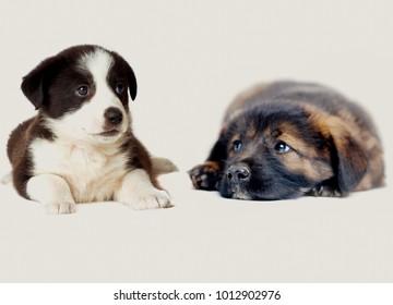 Puppies lie together