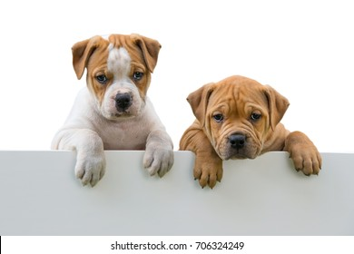 Puppies looking over a wall