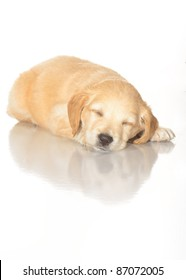 Puppies on a white background