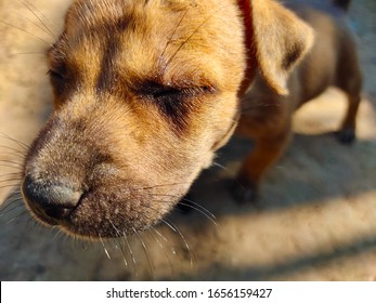 Puppies are standing with their eyes closed in the morning in the light of summer.